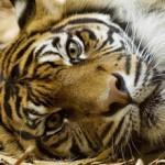 'Laat moeilijk te redden dieren uitsterven'
