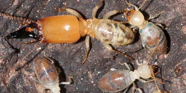 https://www.scientias.nl/wp-content/uploads/2012/07/termiet1.jpg