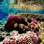 Robotjes gaan kapot koraal weer aan elkaar 'metselen'