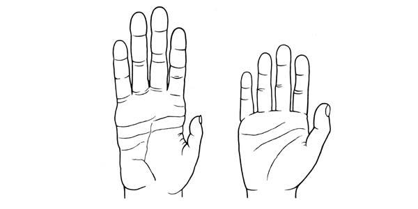 Links de hand van een chimpansee. Rechts de hand van een modern mens. Afbeelding: Denise Morgan / University of Utah.