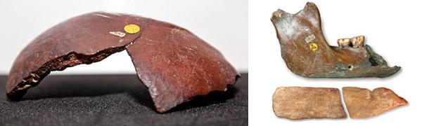 Diverse fossiele resten die Woodward en Dawson hebben teruggevonden. Links de stukjes schedel. Rechtsboven de kaak met twee tanden en rechtsonder het stukje olifantenbot. Foto's: Natural History Museum.