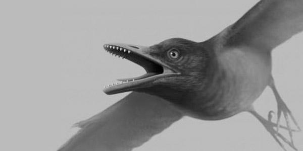 vogel gebit