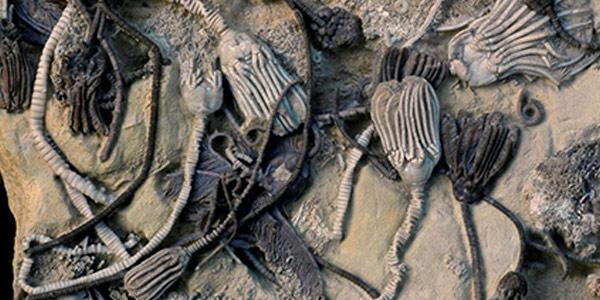 fossiele resten