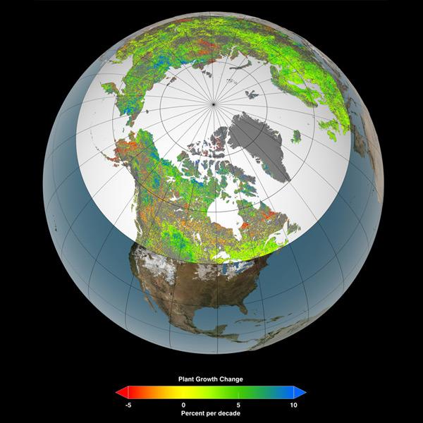 Noordelijk gelegen gebieden worden steeds groener. Afbeelding: NASA's Goddard Space Flight Center Scientific Visualization Studio.