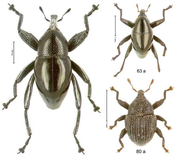 Enkele nieuwe soorten kevers. Foto's: Species ID.