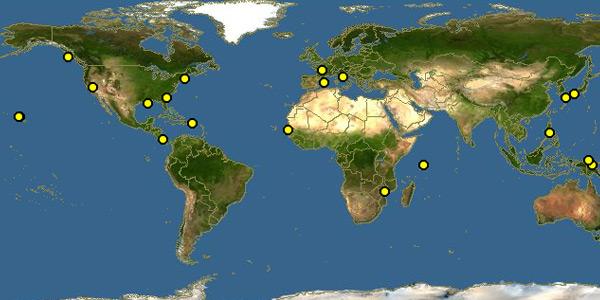 T. dohrnii komt wereldwijd voor. Afbeelding: Discover Life / The Polistes Corporation.