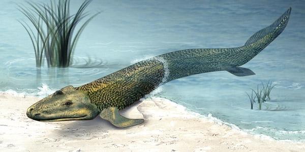 eerste-landdieren