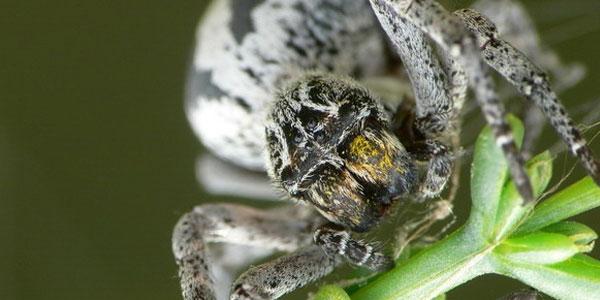 Spinnen hebben persoonlijkheden en krijgen taak die daarbij past