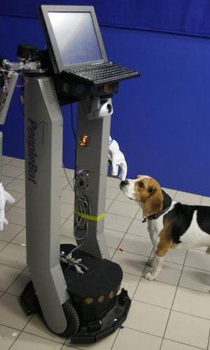 De hond vindt de robot zeker interessant. Afbeelding: Eniko Kubinyi.
