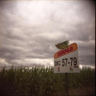 Een veld met genetisch gemodificeerde maïs in de Verenigde Staten. Dekalb is een dochteronderneming van Monsanto. Foto: Flickr.com
