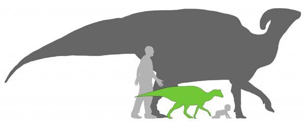 Een volwassen Parasaurolophus (donkergrijs) en de baby-dino (groen) in vergelijking met een volwassen mens en een baby. Afbeelding: Matt Martyniuk / Scott Hartman / Andy Farke.