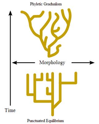 De twee theorieën: fyletisch gradualisme en punctuated equilibria. Afbeelding: Miguel Chavez (via Wikimedia Commons).