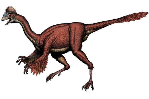 De nieuwe dinosaurussoort. Afbeelding: Bob Walters.
