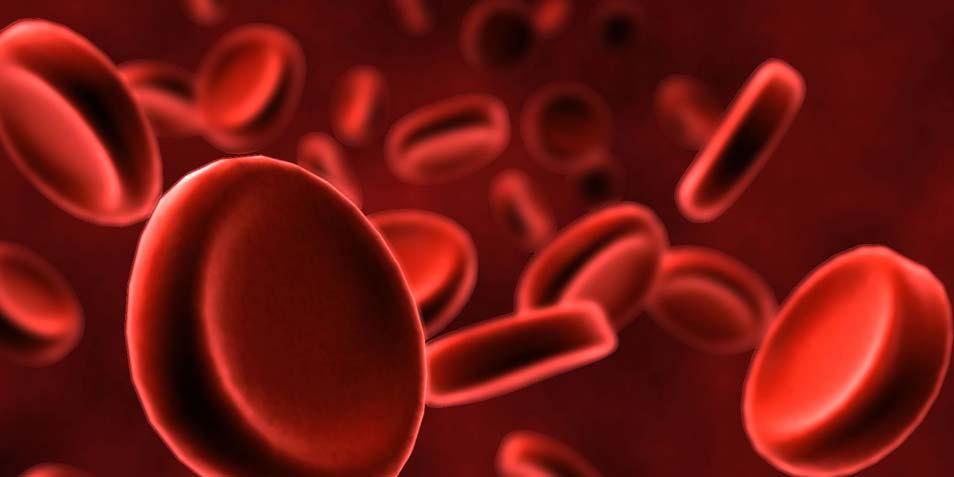 bloedcel