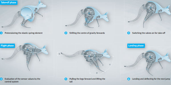 Dit plaatje laat goed zien hoe complex de kangoeroe (binnenin) werkelijk is. Allereerst moet deze met behulp van een soort veren in de poten de sprong maken (1), het lichaam naar voren bewegen, waardoor het zwaartepunt ergens anders komt te liggen (2), waarna de sprong daadwerkelijk genomen kan worden door de poten te strekken (3). Om te landen moeten de poten naar voren en de staart omhoog worden bewogen. Afbeelding: FESTO.