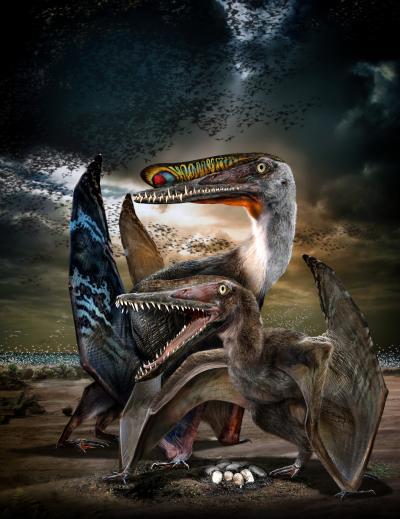 Zo moet de nieuw ontdekte soort er ongeveer hebben uitgezien. Afbeelding:  Chuang Zhao.