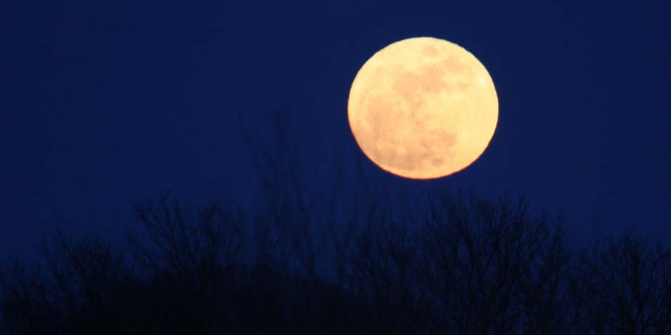 maan-groot