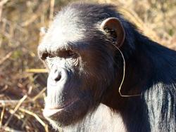 Een grassprietje in het oor. Afbeelding: Edwin van Leeuwen.
