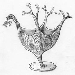 Zo moet het ontdekte dier er 560 miljoen jaar geleden ongeveer hebben uitgezien. Afbeelding: University of Cambridge.
