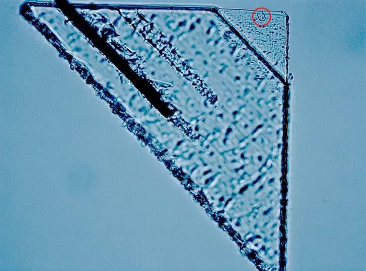 Een gaatje in de aerogel-panelen veroorzaakt door interstellair stof. Afbeelding: Andrew Westphal / UC Berkeley.