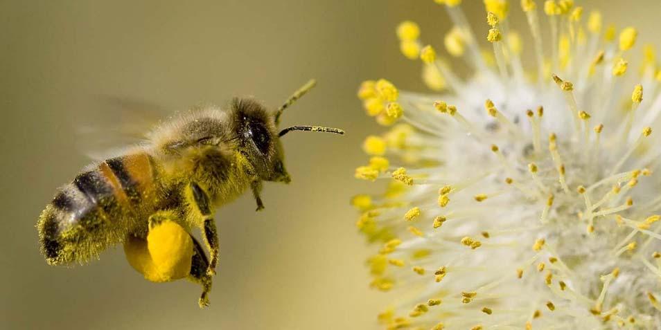 pollen-lucht