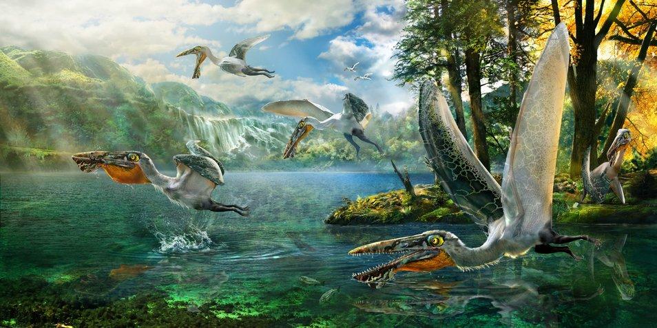 rsz_pterosaurus