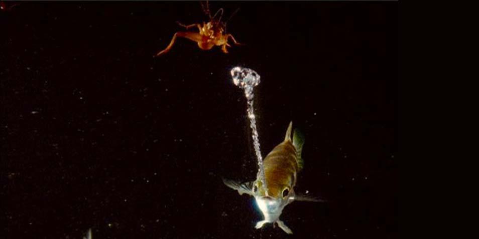 spugende-vis