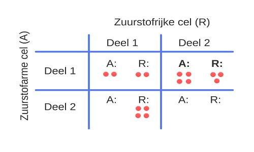 In deze speltheoretische tabel is af te lezen hoeveel energiedeeltjes er vrijkomen bij een zuurstofarme cel (A) en een zuurstofrijke cel (R) als de cellen deel één en deel twee van het proces dat ze energie oplevert, uitvoeren.