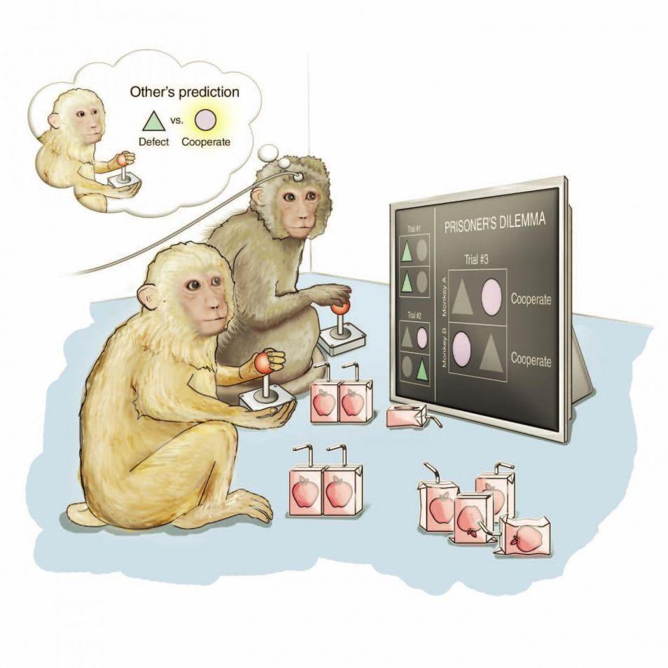 De apen aan het werk. Afbeelding: Katie Ris-Vicari / Cell 2015.