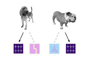 De duiven leerden om een specifiek pictogram te associëren met honden. Afbeelding: University of Iowa.