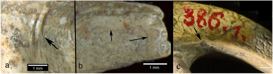 Drie voorbeelden van bewerkingen die door een Neanderthaler zijn uitgevoerd.