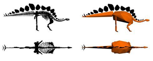 Modellen van het (beklede) skelet van de Stegosaurus. Afbeelding: Natural History Museum London.