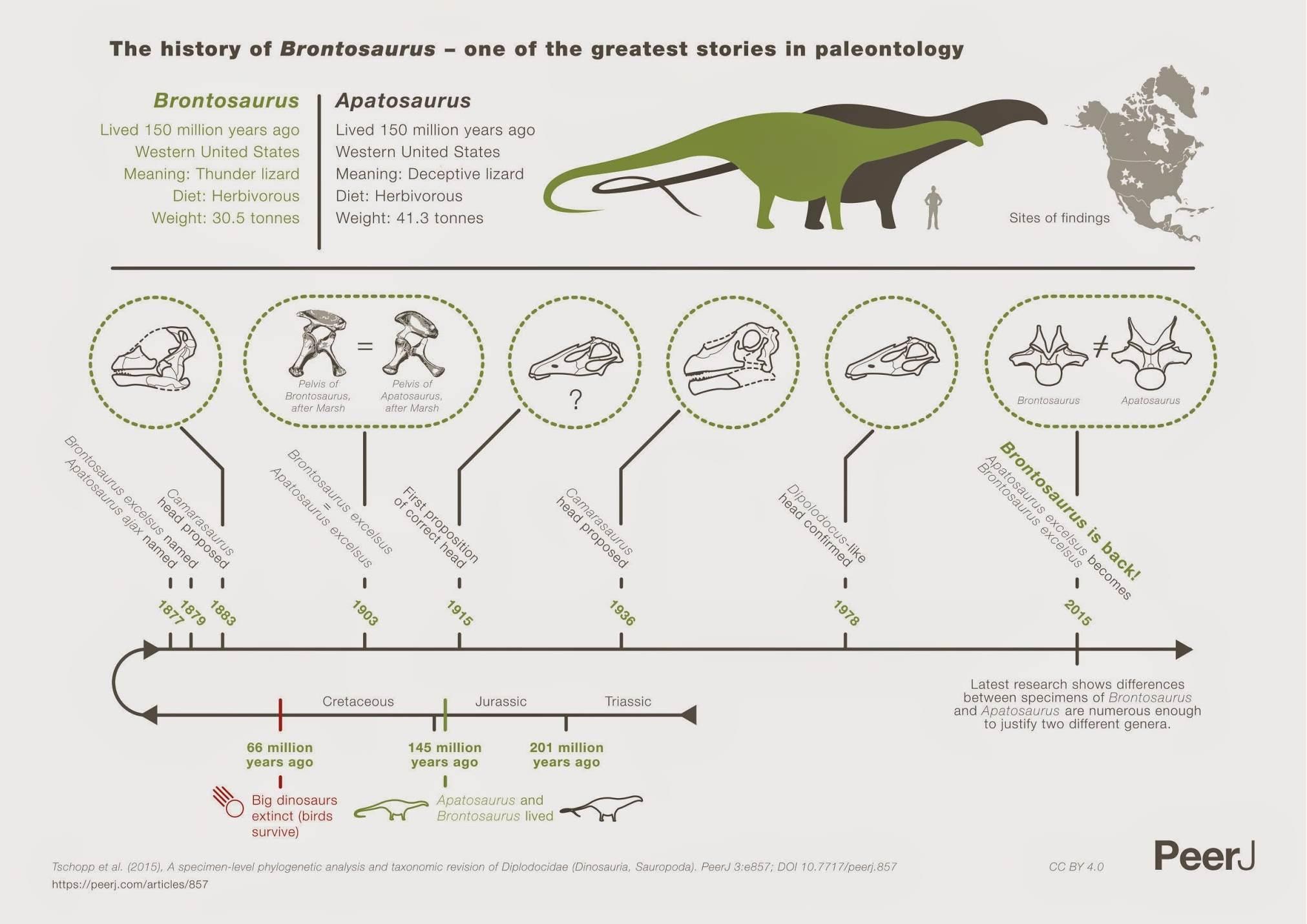 Omdat een beeld meer zegt dan duizend woorden: de geschiedenis van de Brontosaurus in beeld. Klik voor een vergroting. Afbeelding: PeerJ.