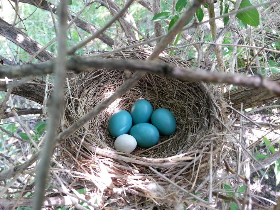 3d-geprinte-eieren