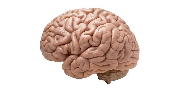 brein2