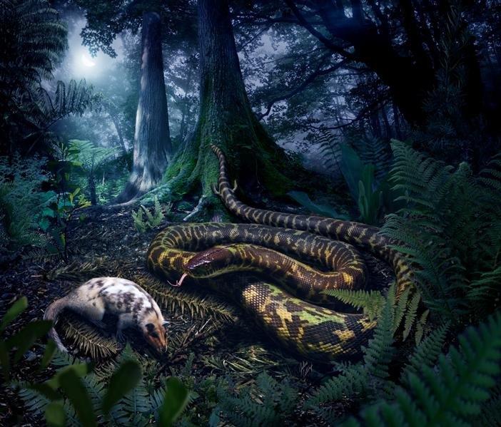 slang-voorouder