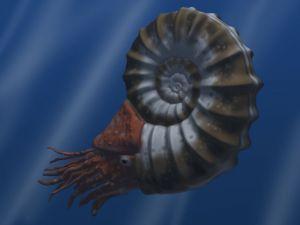 De Asteroceras obtusum was een ammoniet. Dit zeediertje werd acht tot twintig centimeter groot.