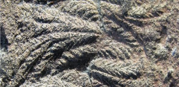 Fossiele resten van rangeomorfen. Afbeelding: AG Liu.