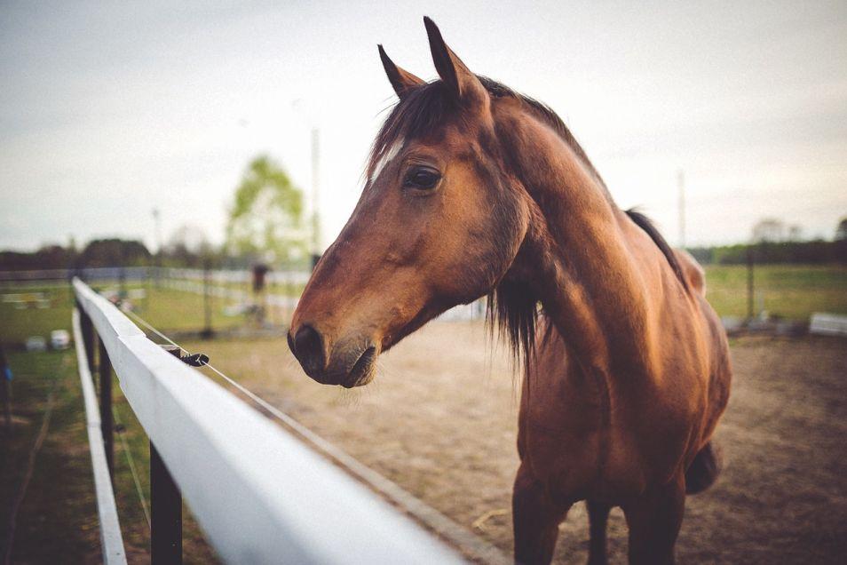 horse-791364_1280