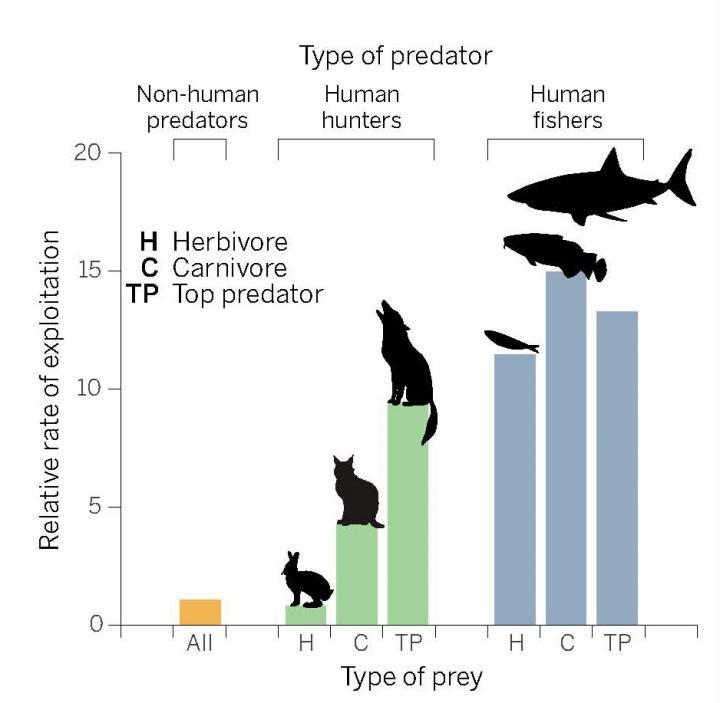 Deze grafiek laat zien dat de snelheid waarmee mensen de natuur exploiteren vele malen hoger ligt dan de snelheid waarmee niet-menselijke jagers dat doen. Afbeelding: P. Huey / Science.