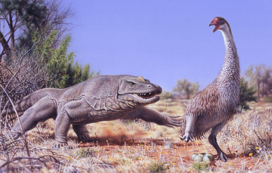 De Varanus priscus (foto: National Geographic)