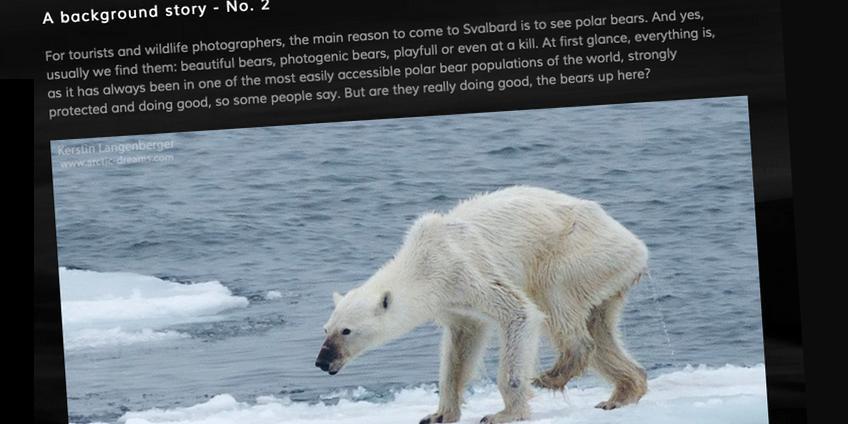 ijsbeer-2