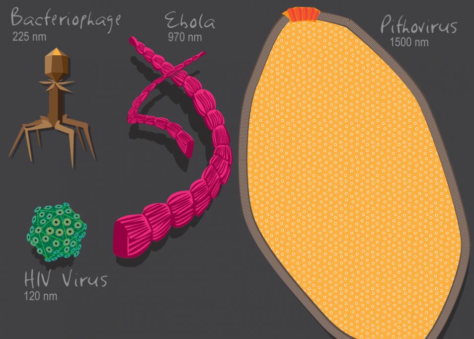 De diversiteit aan virussen is enorm. Afbeelding: Julie McMahon.