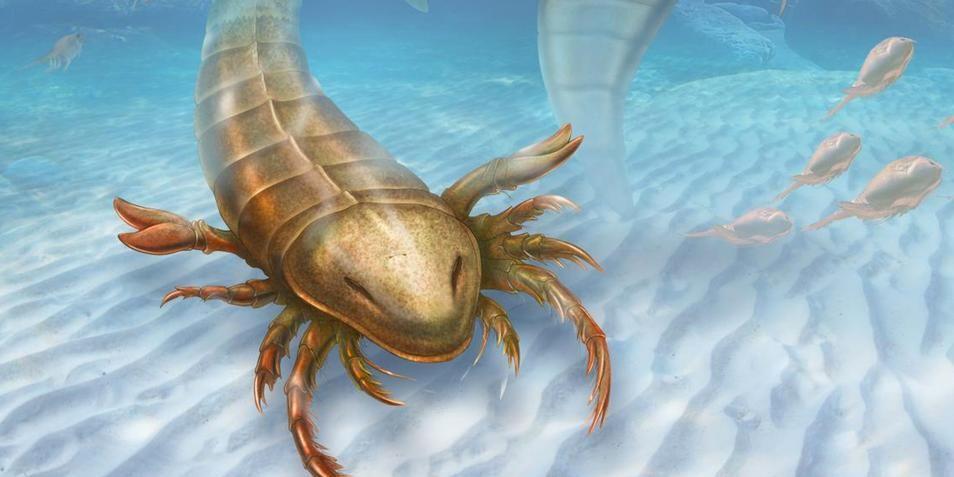 zeeschorpioen
