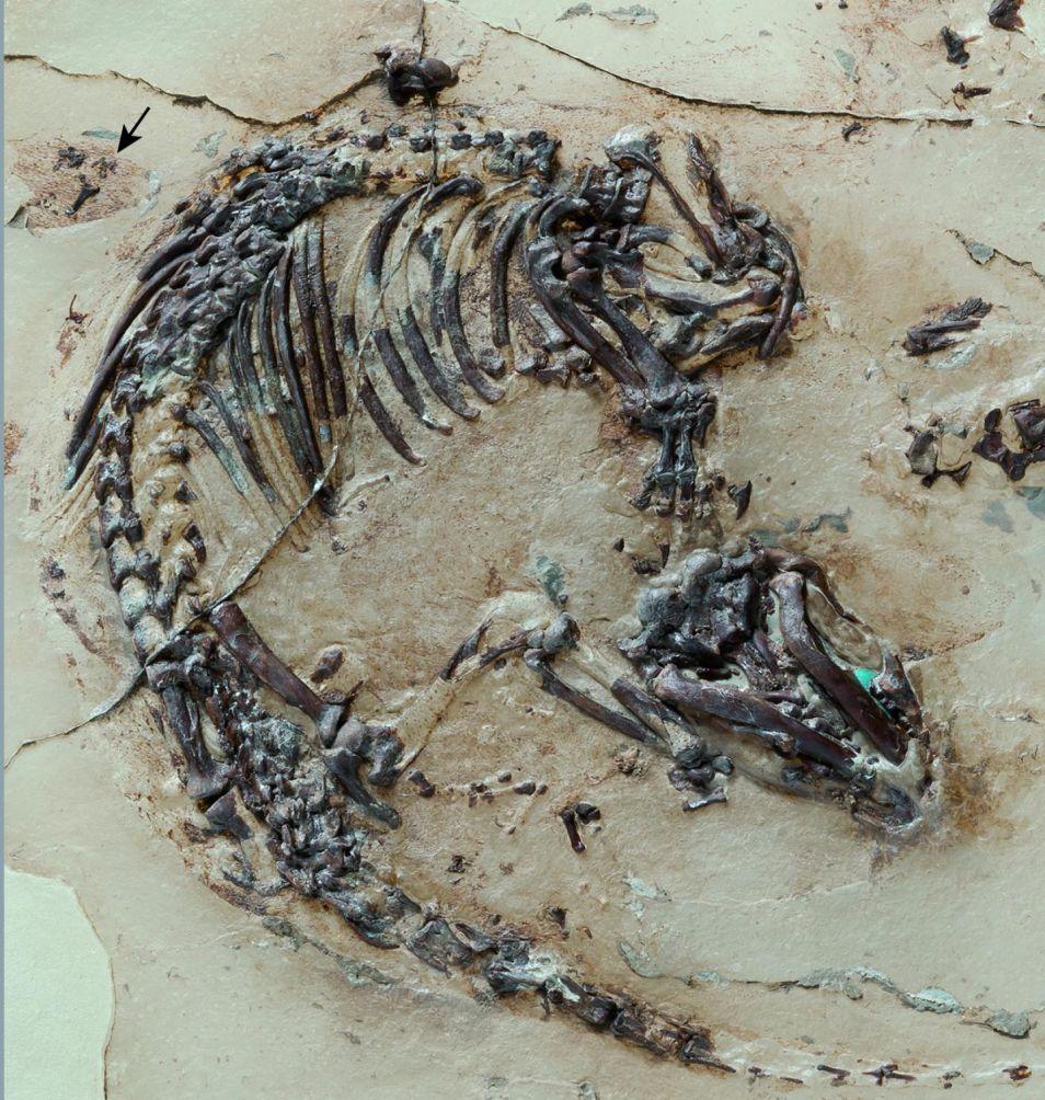 het-fossiel