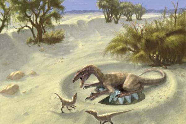 Oviraptor. Afbeelding: Doyle Trankina / Gerald Grellet-Tinner.