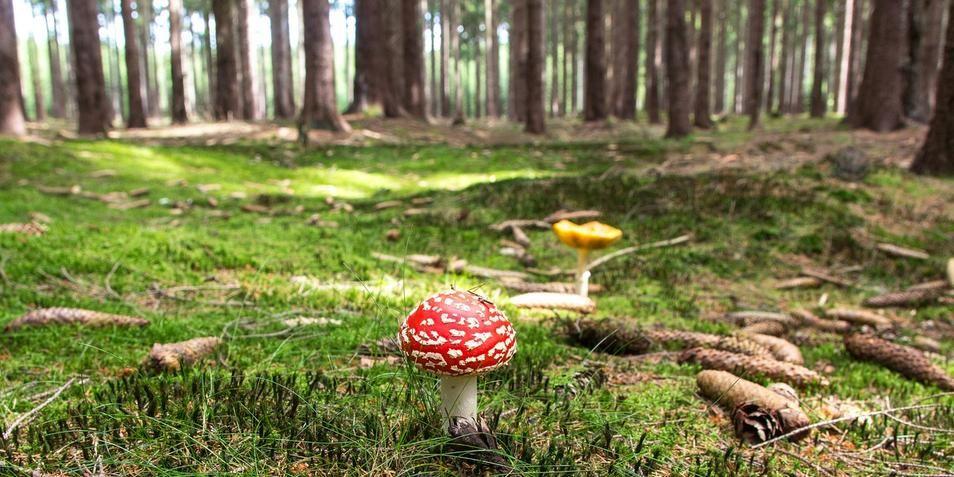 Netwerken in het bos: de paddenstoel is er maar druk mee.