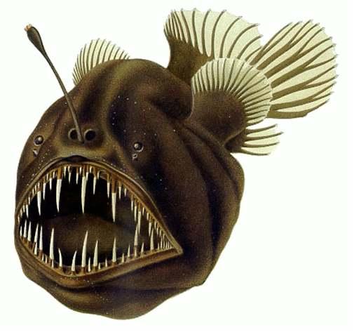 Niet moeders mooiste, deze diepzeehengelvis. Afbeelding: via Wikimedia Commons.