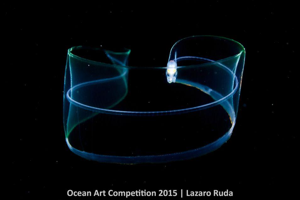 In de categorie 'Macro' ontving fotograaf Lazaro Ruda het brons met deze fraaie foto van leptocephalus, een jonge aal.