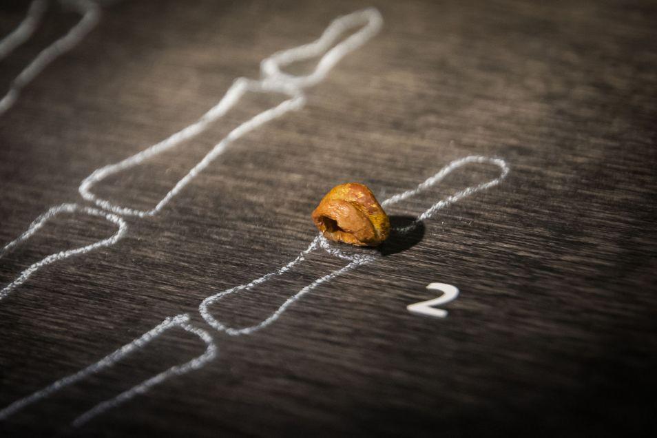 Een botje van Homo denisova. Afbeelding: Thilo Parg.